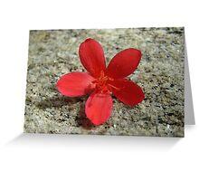 Spicy Jatropha  Greeting Card
