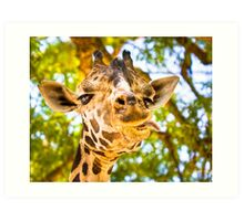 What Ya Looking At? - Funny Giraffe Hamming it Up Art Print