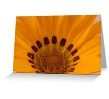 Gazania Macro Details Greeting Card