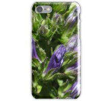 Great Blue Lobelia (Lobelia siphilitica) iPhone Case/Skin
