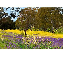 The Colour of Spring Photographic Print