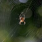 Welcome to My Web by Lin Taylor