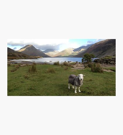 Wast Water with a Herdwick Sheep Photographic Print