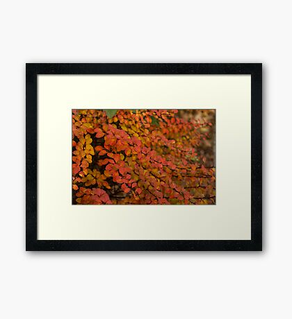 Multicolored Miniatures -  Framed Print