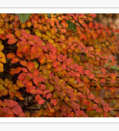 Multicolored Miniatures -  Sticker