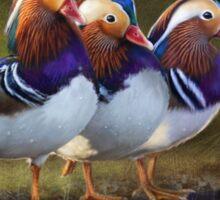 four brothers mandarin ducks Sticker