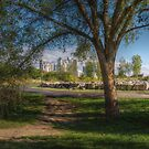 Mimico Park with a View of Humber Bay Shores by Jessica Dzupina
