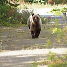 This Grizzly Charged Me by David McMahon