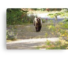 This Grizzly Charged Me Canvas Print