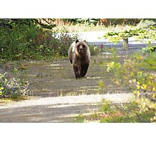 This Grizzly Charged Me Photographic Print