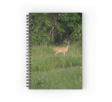 Buck Deer #2 Spiral Notebook