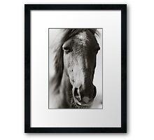 BW Horse #6  Framed Print