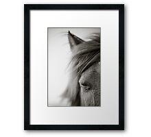 BW Horse #7  Framed Print