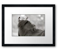 BW Horse #8  Framed Print