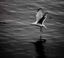 Free Bird by Ladymoose