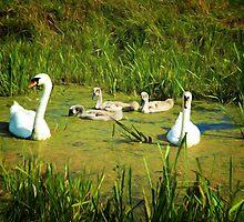 Swanning Around by Simon Duckworth