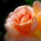 Orange Romance By Lorraine McCarthy by Lozzar Flowers & Art