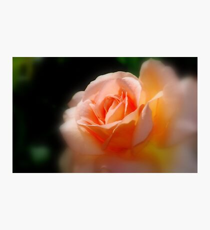 Orange Romance By Lorraine McCarthy Photographic Print