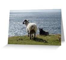 Sheep at Arranmore, Donegal Greeting Card