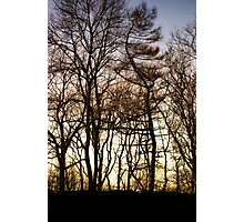 Silhouetted Trees Photographic Print