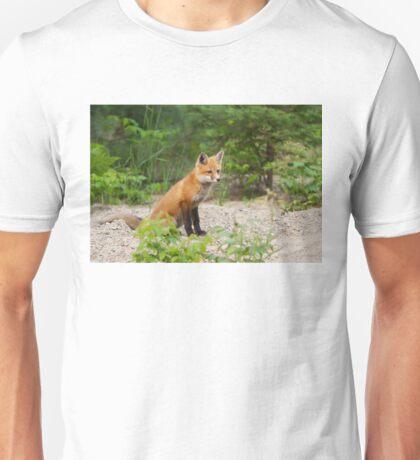 Red fox kit - Algonquin Park, Canada T-Shirt