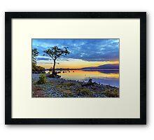 Lone Tree: Milarrochy Bay, Loch Lomond Framed Print