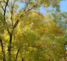 Golden autumn colors Sticker
