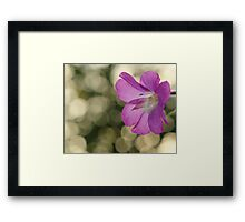 Pink Hairy Willow Herb Framed Print
