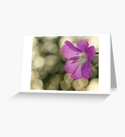 Pink Hairy Willow Herb Greeting Card