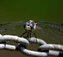 Dragonfly on a Chain by imagetj