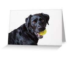 Baxter with ball, another angle Greeting Card