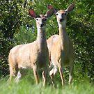 Doe A Deer A Female Deer by Martha Medford