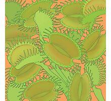 Free Hugs! (Venus Flytrap - Orange) Photographic Print