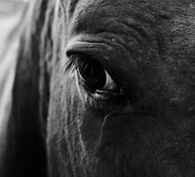 Eye of a horse by lizwilsonphotog