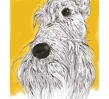 Scottie Sketch Photographic Print