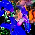 I dream of Petunias  by Carolyn Clark