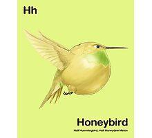 Hh - Honeybird // Half Hummingbird, Half Honeydew Melon Photographic Print