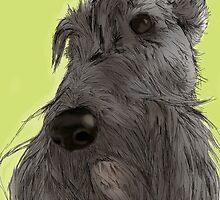 Scottish Terrier sketch by BonniePortraits