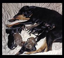 PERFECTLY FORMED NEWBORN DOBERMAN MOTHER AND PUPPIES AW by ✿✿ Bonita ✿✿ ђєℓℓσ