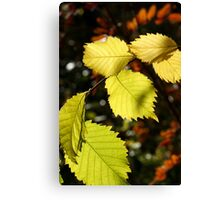yellow fall leaves Canvas Print