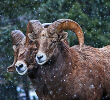 Bighorn Brothers - The Kootenays by JamesA1