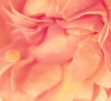 Secret Garden | Peach rose Sticker