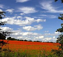 Poppy Landscape  by ScenicViewPics