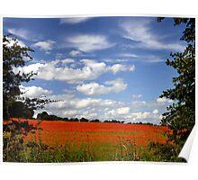 Poppy Landscape  Poster