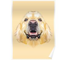 Golden Retriever low poly. Poster