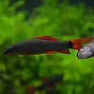 The PhotoBombing Fish by Sean Paulson