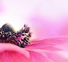 Precious Pink... by Bob Daalder