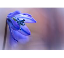 Blooming Blue... Photographic Print