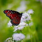 Monarch Butterfly by AspenWillow
