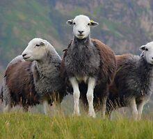 The Three Amigos by Rob Parsons